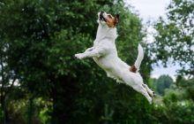 Pourquoi mon chien saute